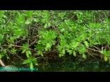 BBC «Дикие Карибы - Зона ураганов» (Документальный, 2007)